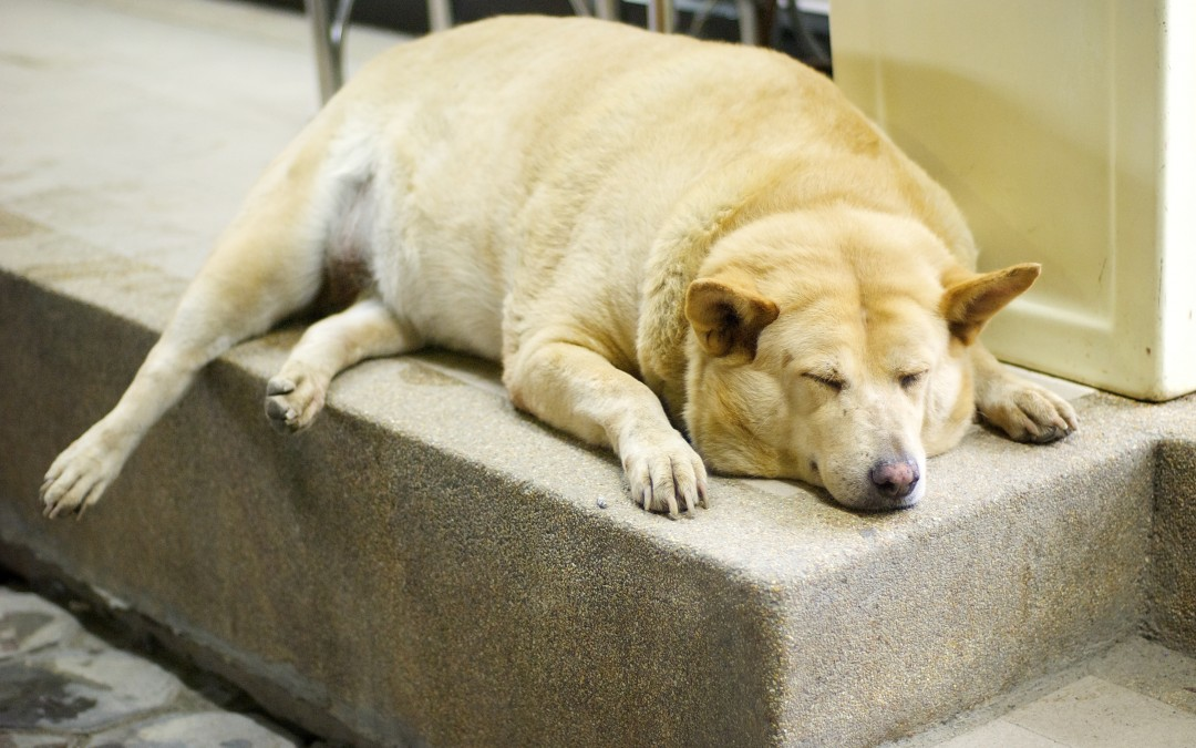 Are you worried about your dogs waistline?
