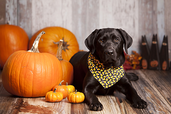 HOW TO MAKE HALLOWEEN LESS SPOOKY FOR YOUR PETS